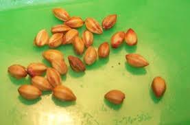 Erythroxylum Coca Seeds