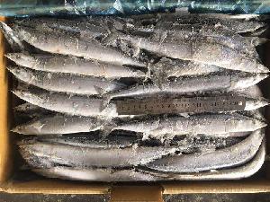 Seafrozen Saury WR 1#