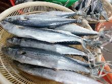 Frozen Spanish mackerel WR