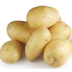 fresh potato / fresh potatoes