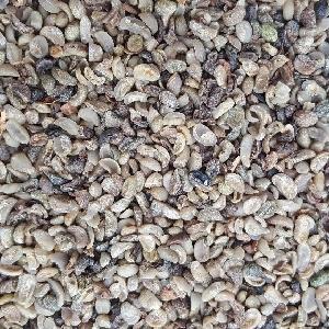 Broken Coffee Beans (Grinders)
