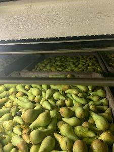 healthy fresh quality pear