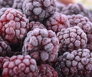 IQF Frozen Blackberry