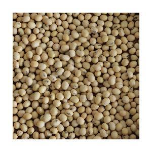 yellow Soya bean