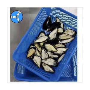 Frozen Shellfish Half Shell Mussel
