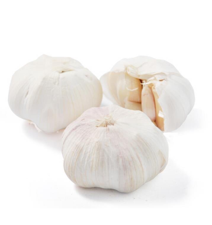 GAP/ KOSHER/ HALAL Fresh Garlic new crop  for sale