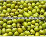 Green Mung Beans - Sprouting new crop