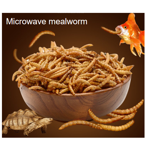 Yellow mealworm wholesaler  promote animal growth feeds animal