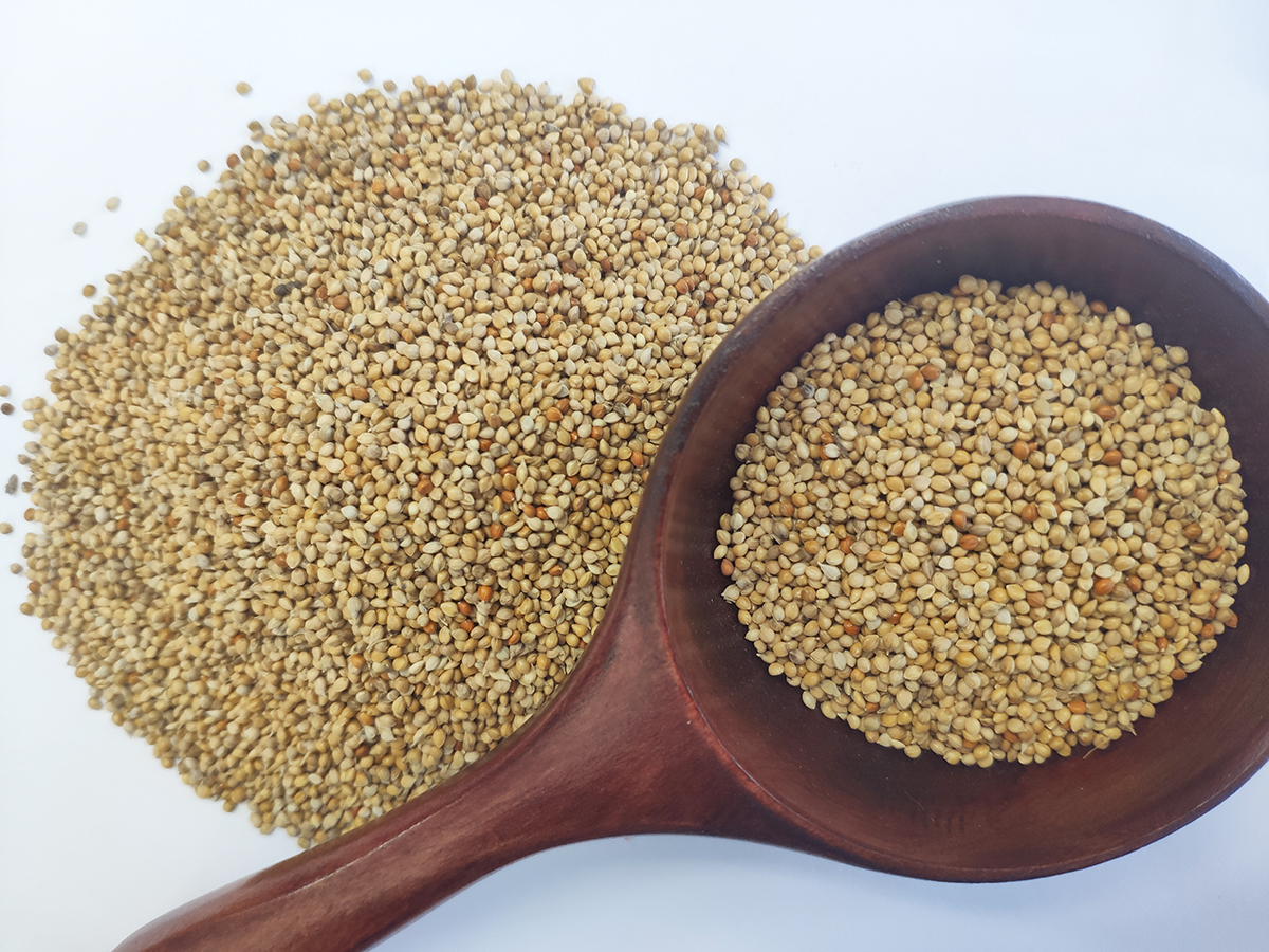 New Crop Chinese yellow millet seeds in husk Low price yellow millet