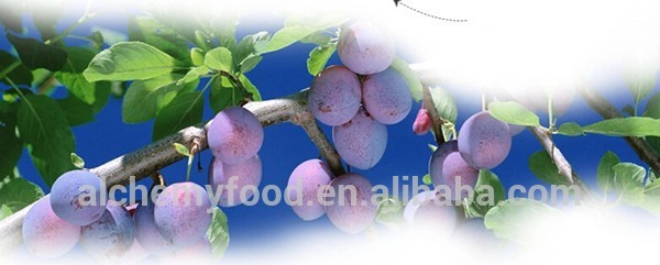 Chinese sweet cherry plum for sale