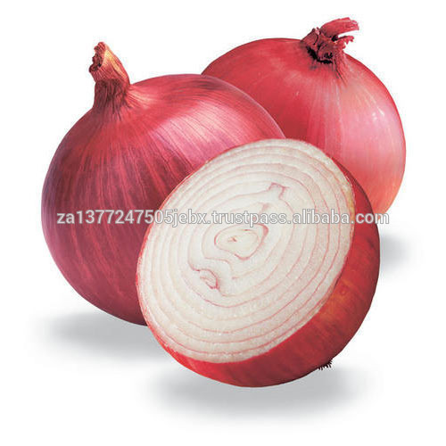 Fresh onion export red onion new crop