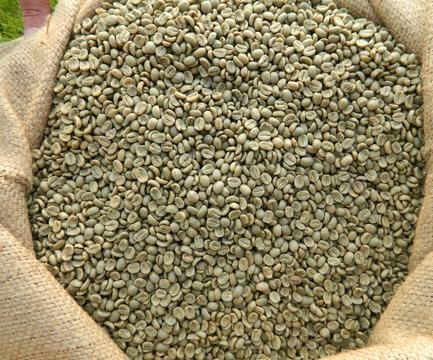 Moderate prices Coffee beans / Robusta / Arabica All In Premium Quality