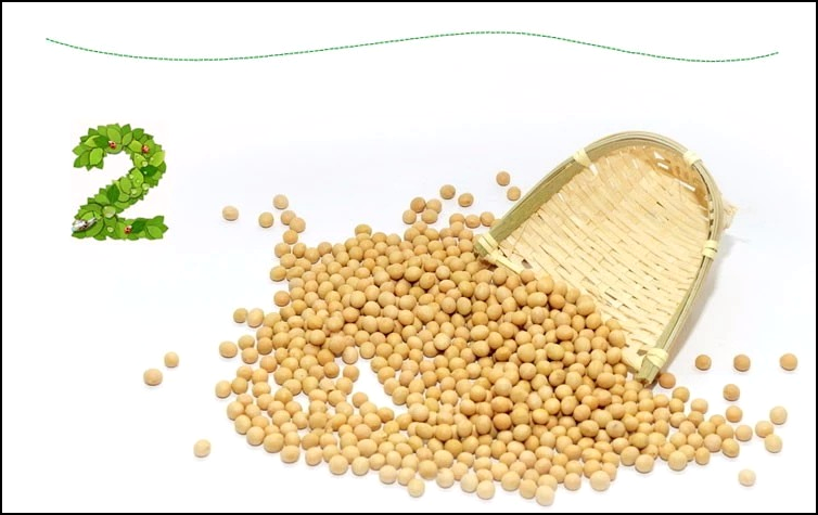 high protein Soybean soy beans new crop Light yellow soybean white Soya bean