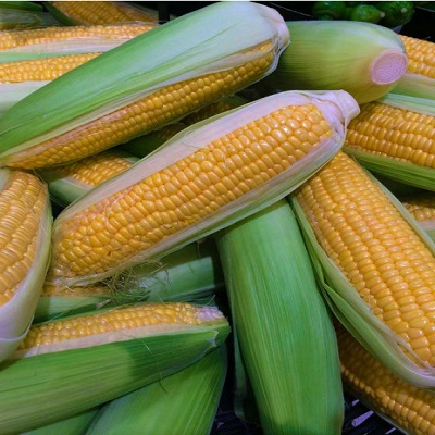 High Quality Freeze Dried Yellow Sweet Corn with Low Price