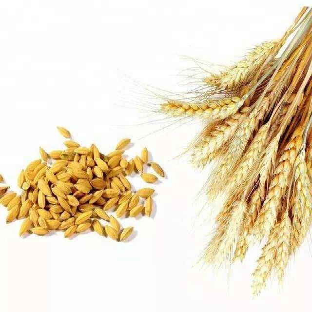 High Quality GMP Natural Hydrolyzed Wheat Protein Powder