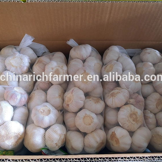 Chinese fresh elephant garlic price for garlic importer