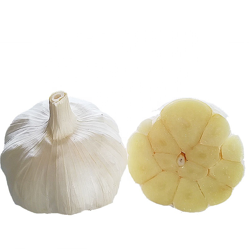 Small new crop packing garlic, we can offer it