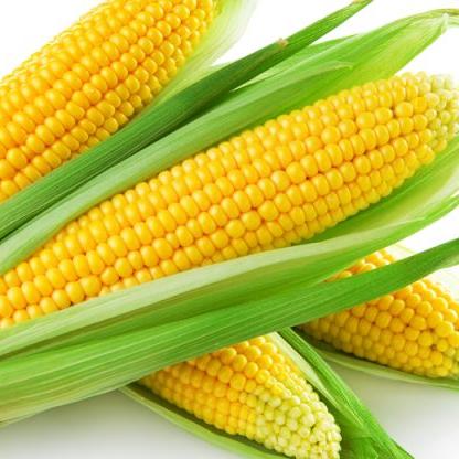 Best quality frozen sweet fresh yellow Corn