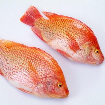 Frozen Black Tilapia/Red Tilapia Fish Whole Round