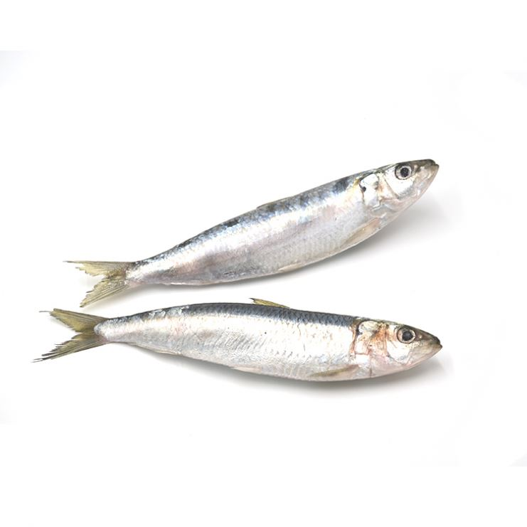 Seafood Frozen Sardine Fish Hgt For Bait On Sale