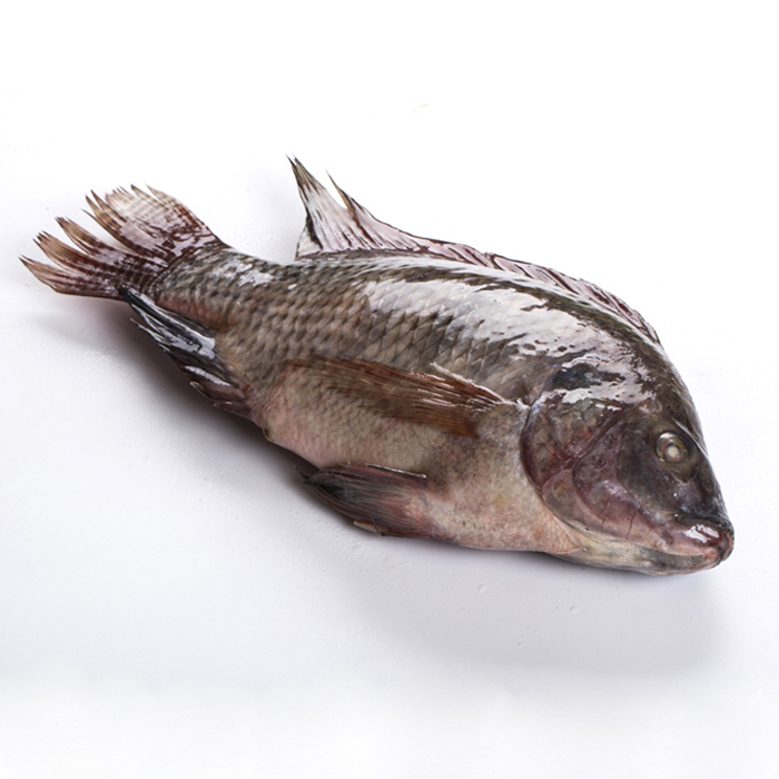 Fish Product Type Grade A Fresh Frozen Black Tilapia whole Fish