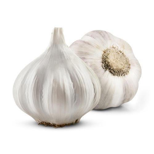 Certified Fresh Pure White Normal White Purple White garlic supplier