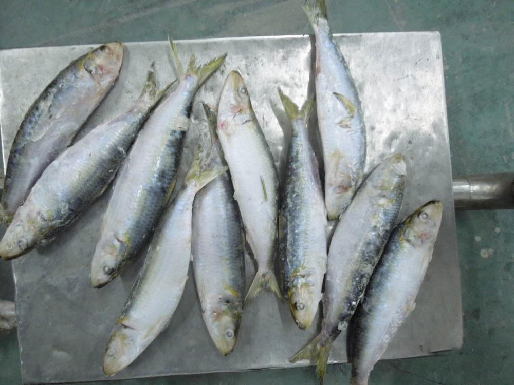 Fishing nets pacific sardines bait on sale products,China ...
