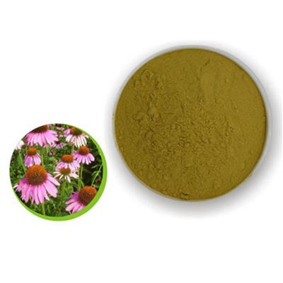 hot sale organic phenolic polyphenol Natural Echinacea Purpurea Flower Extract Powder with best price