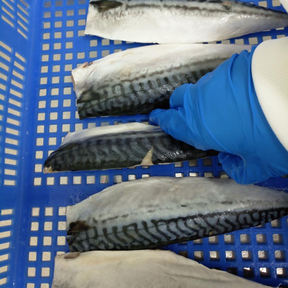 New Process Good Quality Frozen Atlantic Mackerel Fillet in Mackerel