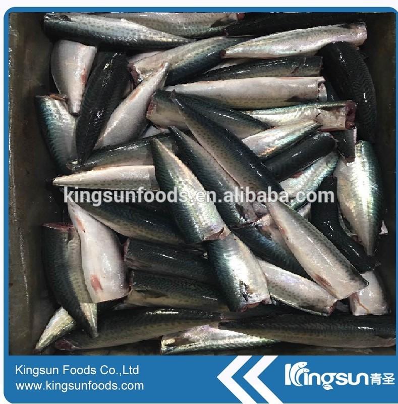 Frozen Seafood Hot Sale Frozen HGT Pacific Mackerel