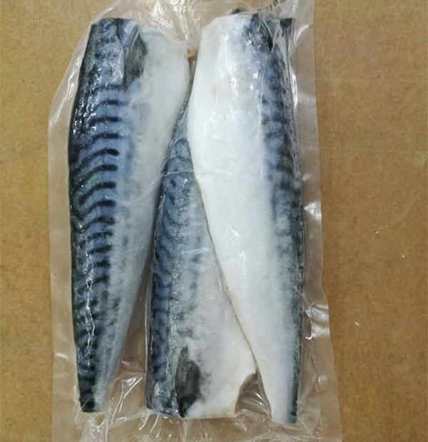 New Season Frozen Atlantic Mackerel Fillet