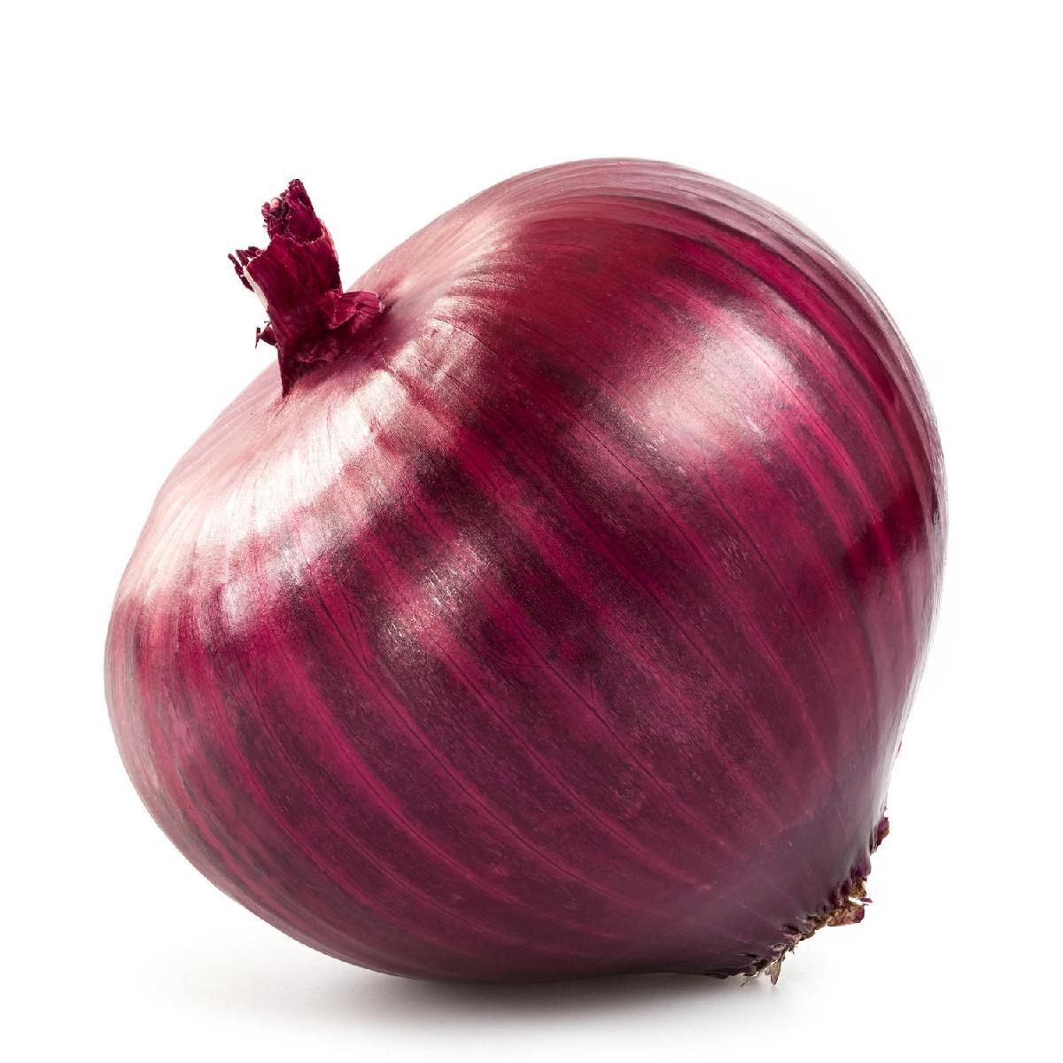 fresh onion for sale