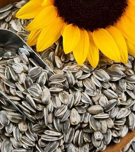 Roasted Sunflower Seeds in Shell