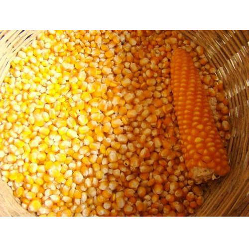 High Quality Freeze Dried Yellow Sweet Corn