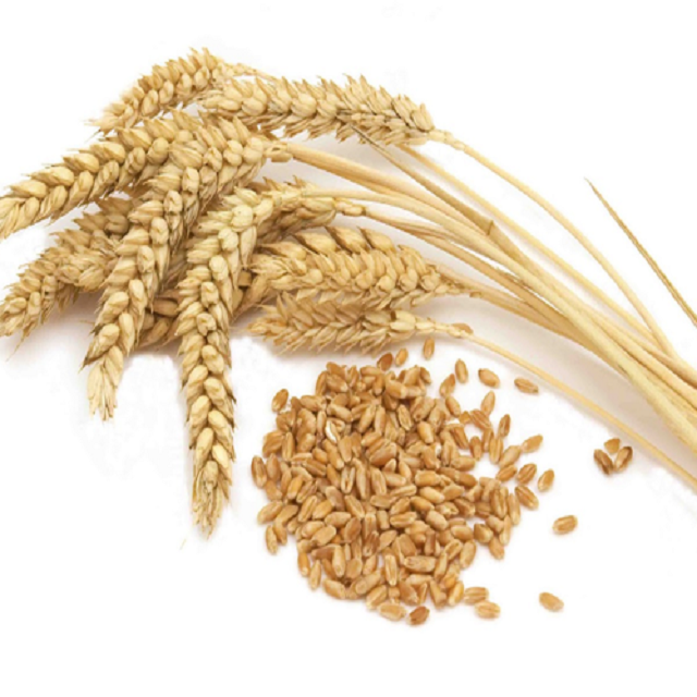 Best Quality Wheat Bran for Animal Feed / Wheat Bran Pellets/ANIMAL FEED WHEAT BRAN