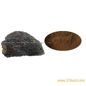 Health Supplement Dual Extract Chaga Mushroom Extract Powder