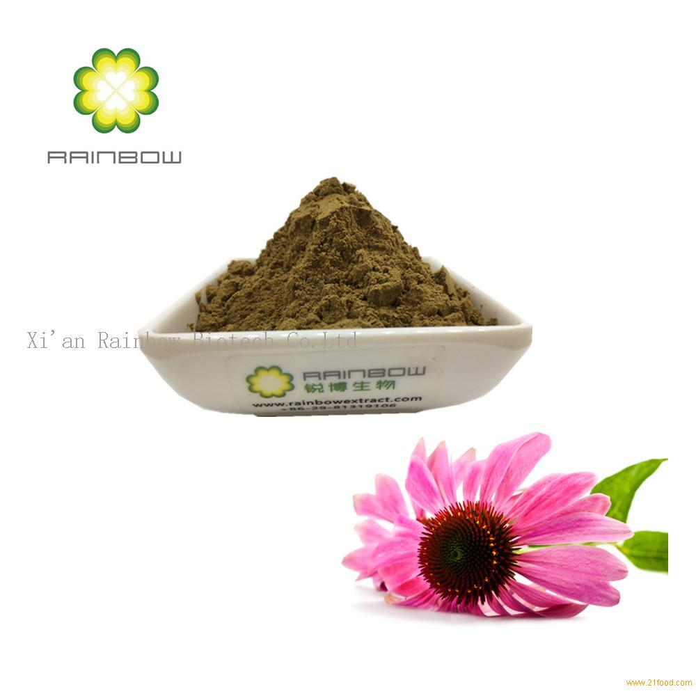 4%polyphenol 1%-4%chicoric acid Echinacea purpurea extract