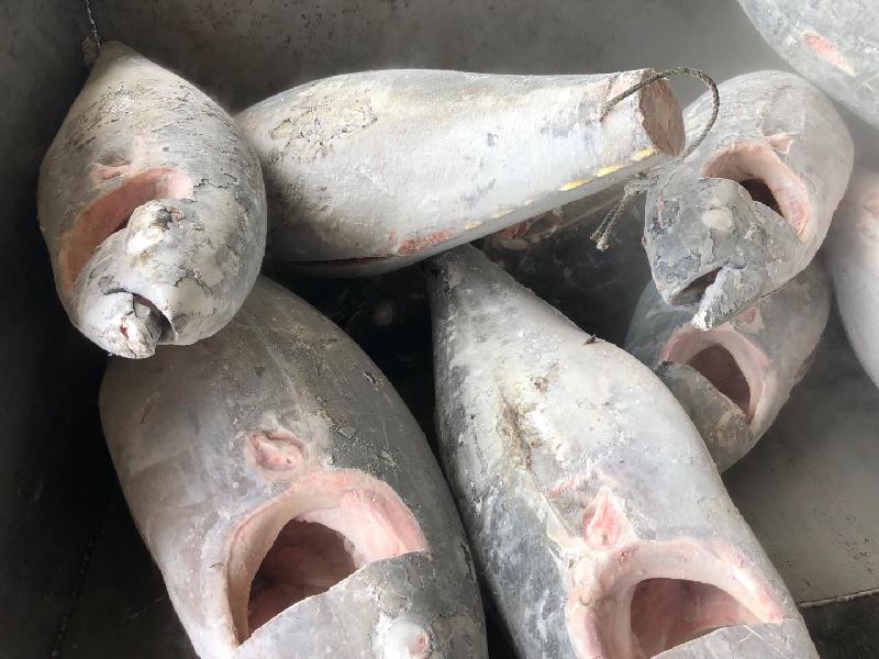 Seafrozen Yellowfin tuna HGT