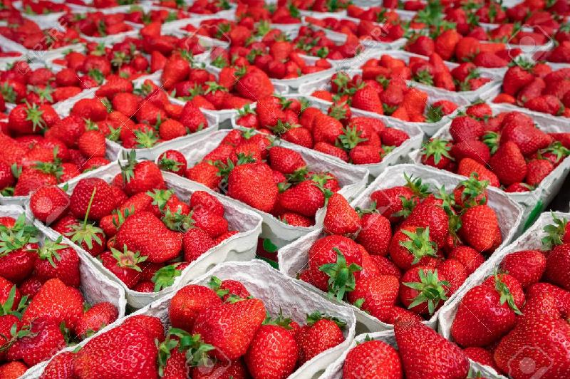 Best Harvested Fresh Strawberry Available NOW!!