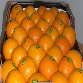 Fresh Fresh Orange for sale Sizes: 44/48/56/64/72/80/88/100/113/125 Gasket: Standard carton