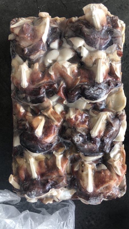 Low price frozen Indian Squid neck
