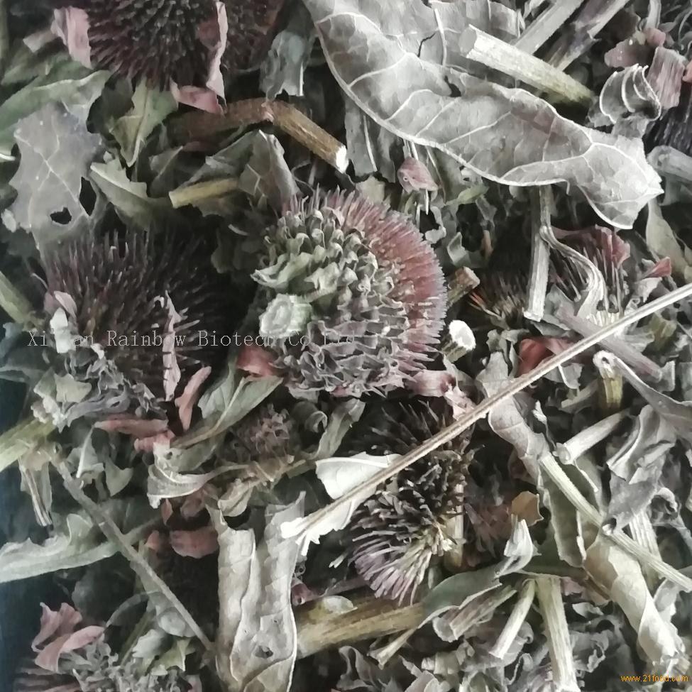 Chicoric acid 4% Echinacea Purpurea Extract echinacea extract