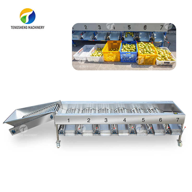 Stainless steel large automatic sorter lemon fruit grading machine(TS-FS670)