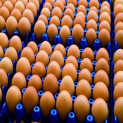 Fresh Chicken Egg, Fresh Table Egg, Fresh Brown And White Eggs