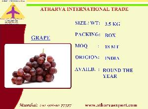 INDIAN FRESH GRAPES EXPORTERS