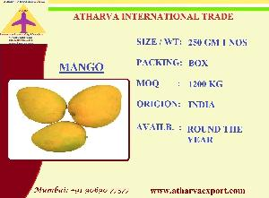 FRESH MANGOES  FRUIT S FROM INDIA
