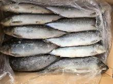 Frozen herring WR roe off 200-300g/pc for canned