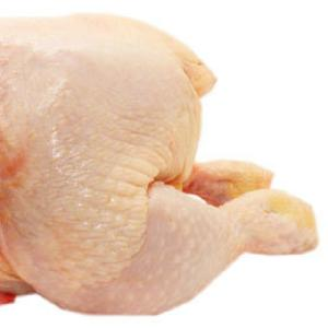 Halal Frozen Whole Chicken For Sell