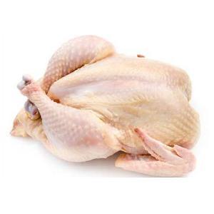 Premium Supplier ! Halal Frozen Whole Chicken Halal Chicken Processed Meat
