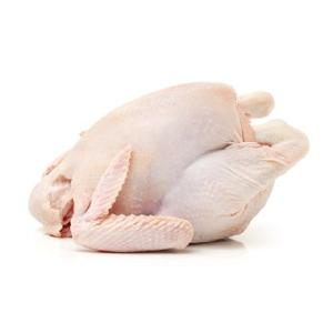 Top Quality Certified Halal Frozen Chicken Feet / Chicken Wings / Frozen Whole Chickenfor Sell